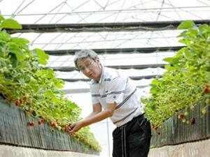 Nông nghiệp Tây Nguyên 'tấn công' vào công nghệ cao