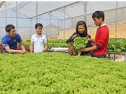 Lâm Đồng: Thạc sỹ 8x khởi nghiệp bằng vườn rau thuỷ canh