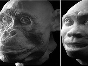 Phát hiện mới gây tranh cãi về tổ tiên loài người
