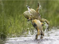 Ai bảo chỉ người mới biết biểu diễn dancing? ếch cũng biết đó thôi