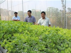 Bắc Giang khởi động nông nghiệp công nghệ cao