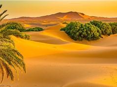 Phát hiện mới: Sa mạc Sahara từng là thiên đường xanh tươi