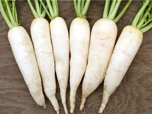 Phương thức trồng của cải trắng trong thùng xốp siêu đơn giản
