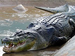 Mexico truy tìm cá sấu dài 3 m bị nghi ăn thịt người