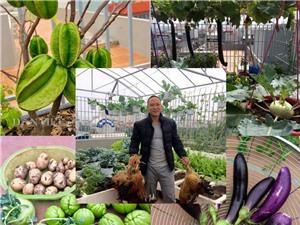 Xuýt xoa vườn cây trái trĩu giàn trên sân thượng của ông bố ở Thủ đô