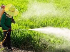Cơ quan hóa chất châu Âu tái kết luận glyphosate không gây ung thư