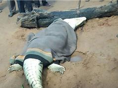 Giết chết cá sấu khổng lồ ăn thịt người ở Zimbabwe