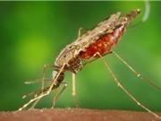 3 loại ký sinh trùng nguy hiểm nhất đối với con người