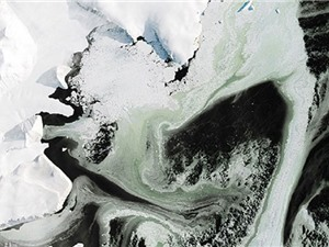 Băng ở Nam Cực chuyển thành màu xanh lục