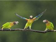 """Clip: Những màn """"quẩy tưng bừng"""" vô cùng hài hước của loài vẹt"""
