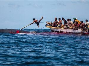 """Clip: """"Rợn người"""" với màn săn cá voi khổng lồ"""