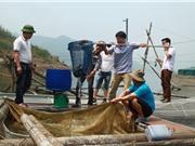 Nở rộ nghề nuôi cá lồng trên sông Đà, lãi 12 - 14 triệu đồng/lồng