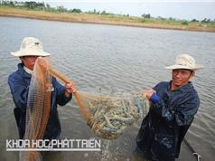 Một số đơn vị nghiên cứu, doanh nghiệp và sản phẩm nổi bật ngành tôm