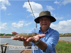 TS Nguyễn Việt Thắng - Chủ tịch Hội Nghề cá Việt Nam: Đầu tư để tri thức hóa con tôm