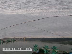 Công nghệ nuôi tôm trong giá rét miền Bắc