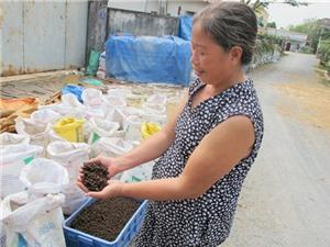 Thu nhập tiền tỷ mỗi năm từ nuôi trùn quế