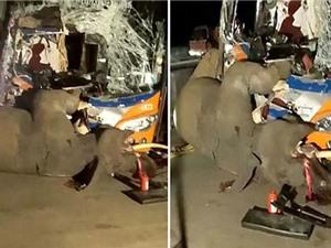 Clip: Xe bus dính tai nạn thảm khốc vì… tông phải voi