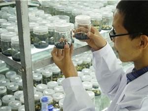 Trung Quốc: Xoài ươm trồng trên vũ trụ ra quả
