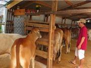 Độc đáo gian hàng chợ bò, nghề mua đi bán lại đang có thu nhập khá