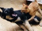 Clip: Chó bị mèo đánh đuổi chạy khắp phố
