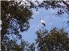 Hàng ngàn con cò quý hiếm xuất hiện trên cánh đồng thị trấn Tràm Chim