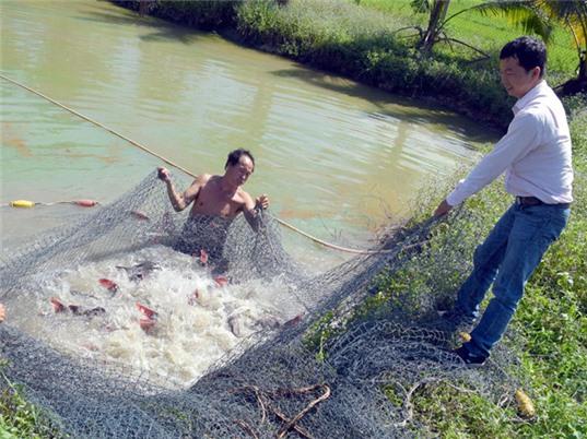 Làm giàu kiếm tiền tỉ từ nuôi cá lăng giống
