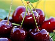 Những tác dụng không ngờ của quả cherry