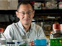 Cách mạng tế bào gốc - sự thận trọng sau cơn sốt