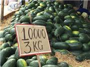 Dưa hấu Nhật 1,7 triệu/quả: Đắt gấp 145 lần vẫn tranh mua