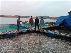 Hồ Thác Bà - Vựa cá khổng lồ Tây Bắc