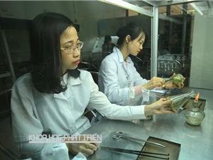 Nhân giống hồng Hạc Trì bằng nuôi cấy mô: Làm được nhưng hiệu quả kinh tế thấp