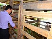 Những cử nhân bỏ bàn giấy về làm nông thành triệu phú ở xứ Tuyên