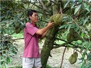 Giải pháp thích ứng hạn, mặn cho cây ăn quả