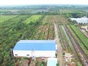Trang trại chanh lớn nhất Việt Nam được đầu tư bao nhiêu tiền?