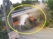 """CLIP HOT NHẤT TRONG NGÀY: Tàu hỏa cán đứt đôi xe tải, cá sấu """"xơi tái"""" trăn"""