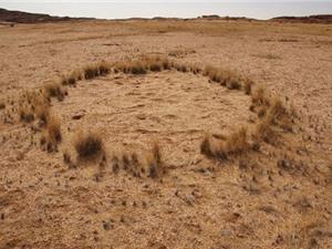 Tìm ra lời giải cho những vòng tròn kỳ quái ở Namibia?