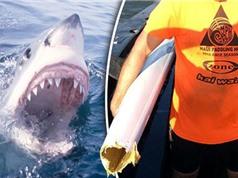 Cá mập cắn đứt đôi thuyền của người đàn ông Australia