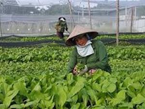 """""""Sẽ rà soát, xây dựng tiêu chuẩn để thúc đẩy nông nghiệp hữu cơ"""""""