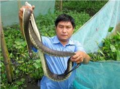 """""""Hốt bạc"""" nhờ nuôi rắn ri cá trong vèo"""