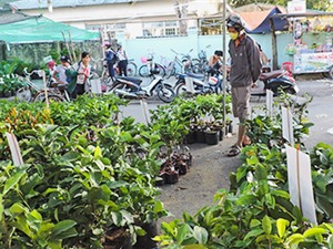 Lộn xộn thị trường cây giống tại Kon Tum