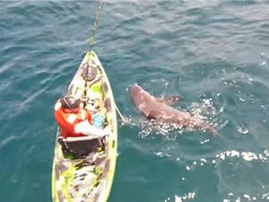 Clip: Suýt chết vì câu trúng cá mập khổng lồ
