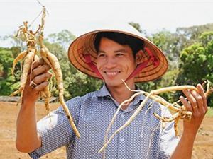Kon Tum: Từ làm thuê thành… ông chủ nhờ trồng sâm