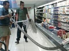 Bắt gặp trăn dài 3,6m khi đi mua sữa chua trong siêu thị