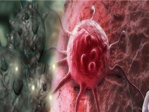 Phương pháp đột phá bắt tế bào ung thư tự phá hủy