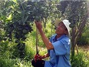 Che lưới mát cho vườn cam, tiết kiệm 40% chi phí tưới