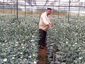 Lâm Đồng: Nông dân xuất khẩu hoa sang Nhật, Hàn