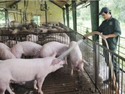 Sản xuất khí sinh học từ nước thải chăn nuôi