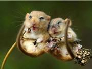 Clip: Những khoảnh khắc siêu hài của động vật