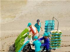 Đồng Tháp đẩy mạnh sản xuất lúa hữu cơ