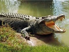 Tình nghi thợ săn Nam Phi mất tích vì bị cá sấu ăn thịt